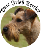 Pure Irish Terrier