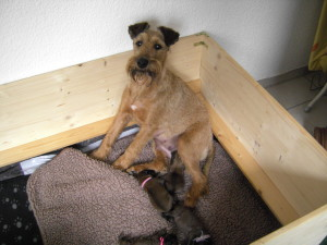 Emma and her first puppies.